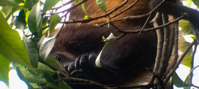 Quepos & Manual Antonio National Park, Costa Rica